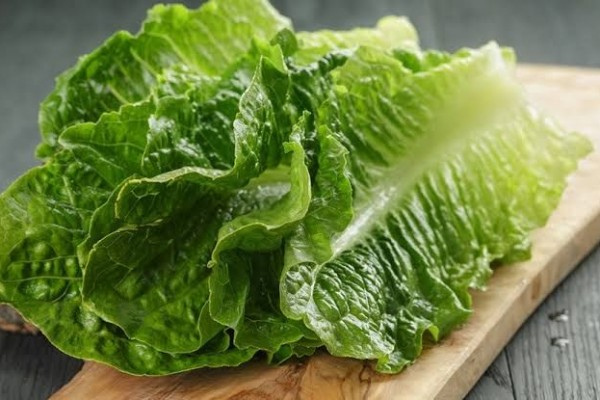 Manfaat Mengkonsumsi Selada Romaine