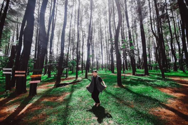 Wisata Hutan Pinus di Gowa